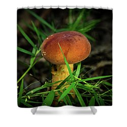 Rusty Brown Plyporacead Amid The Grass Shower Curtain
