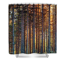 Rusy Forest Shower Curtain by Evgeni Dinev