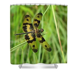 Ryothemis Dragonfly Shower Curtain