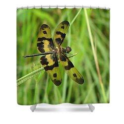 Ryothemis Dragonfly Shower Curtain