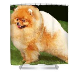 Sable Pomeranian Shower Curtain