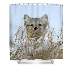 Sachs Harbour Fox Shower Curtain