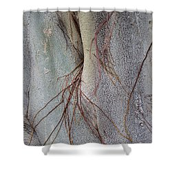 Sacred Bodhi Tree Detail With Red Creeper Vines Shower Curtain