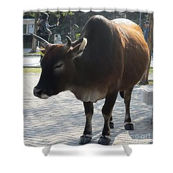 Shower Curtain featuring the photograph Sacred Cow 2 by Randall Weidner