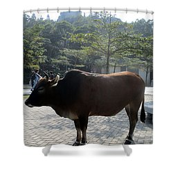 Shower Curtain featuring the photograph Sacred Cow 3 by Randall Weidner