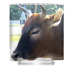 Shower Curtain featuring the photograph Sacred Cow 4 by Randall Weidner