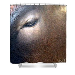 Shower Curtain featuring the photograph Sacred Cow 5 by Randall Weidner