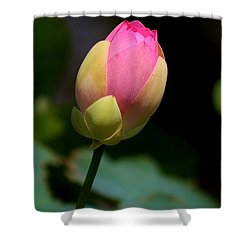 Sacred Lotus Bud 3 Shower Curtain