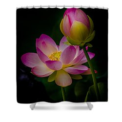 Sacred Water Lily 4 Shower Curtain