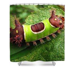 Saddleback Caterpillar Shower Curtain