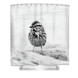 Safe And Secure Shower Curtain by Anita Oakley