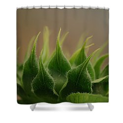 Shower Curtain featuring the photograph Safe Within by Ramona Whiteaker