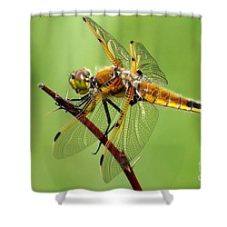 Saffron-winged Meadowhawk Shower Curtain