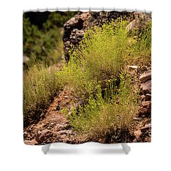 Sage Shower Curtain