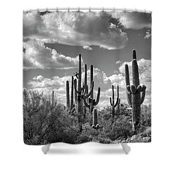 Shower Curtain featuring the photograph Saguaro And Blue Skies Ahead In Black And White  by Saija Lehtonen