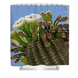 Saguaro Blooms Shower Curtain