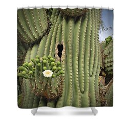 Saguaro In Bloom Shower Curtain