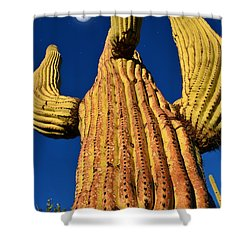 Saguaro Reaching To The Sky Shower Curtain