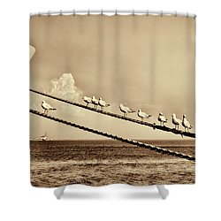 Sailors V2 Shower Curtain