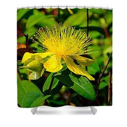Saint John's Wort Blossom Shower Curtain