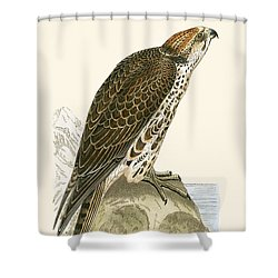 Saker Falcon Shower Curtain by English School