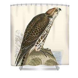 Saker Falcon Shower Curtain