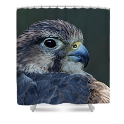 Saker Falcon Shower Curtain