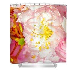 Shower Curtain featuring the photograph Sakura Cherry Flower - Wedding Of Nature by Alexander Senin