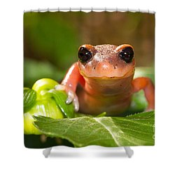 Salamander Smile Shower Curtain