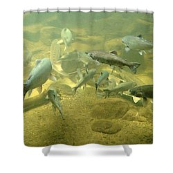 Shower Curtain featuring the photograph Salmon And Sturgeon by Katie Wing Vigil