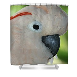 Salmon Crested Moluccan Cockatoo Shower Curtain by Sharon Mau