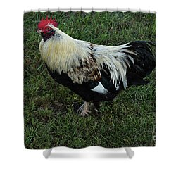 Salmon Faverolle Rooster Shower Curtain