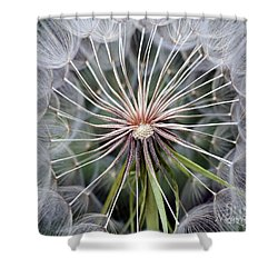 Salsify Shower Curtain