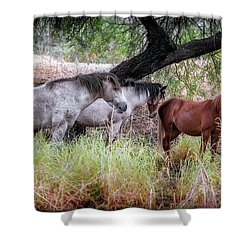 Salt River Wild Horses Shower Curtain
