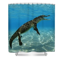 Saltwater Crocodile Shower Curtain by Franco Banfi and Photo Researchers