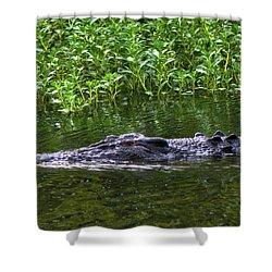 Saltwater Crocodile In Kakadu Shower Curtain