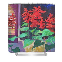 Salvia In The Windowbox Shower Curtain by Carol Strickland