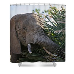 Samburu Elephant Shower Curtain by Gary Hall