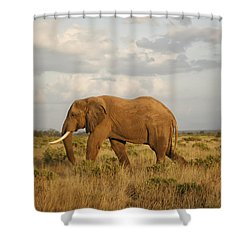 Samburu Giant Shower Curtain by Gary Hall