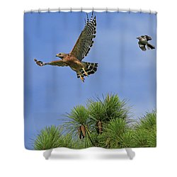 Samson And Goliath Shower Curtain