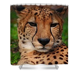 Shower Curtain featuring the photograph Samson by Michiale Schneider