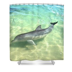 Shower Curtain featuring the photograph Samu 1 , Monkey Mia, Shark Bay by Dave Catley