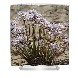 San Juan Onion Shower Curtain