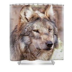 Sancho Shower Curtain by Elaine Malott