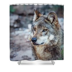 Sancho Searching The Area Shower Curtain by Elaine Malott