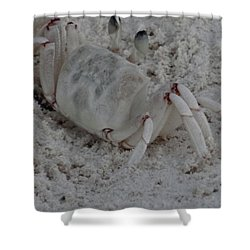 Sand Crab Shower Curtain