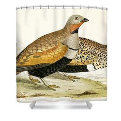 Sand Grouse Shower Curtain by English School