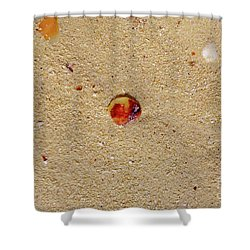 Shower Curtain featuring the photograph Sand Shell Art by Francesca Mackenney