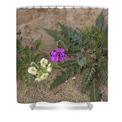 Sand Verbena Sunset Shower Curtain
