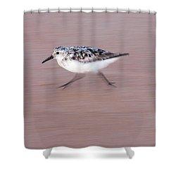 Sanderling On The Run Shower Curtain